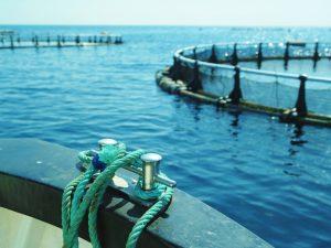 Centros de cultivo marinos Corvina REX