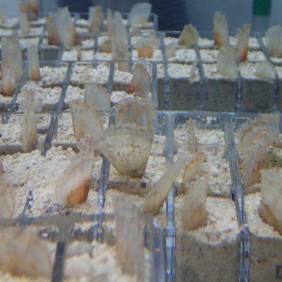 Hito medioambiental de Frescamar corroborado por IMEDMAR-UCV