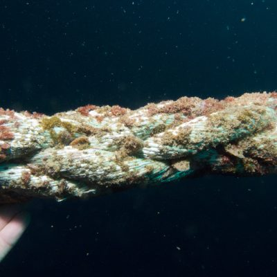 Maromas de granjas marinas estudiadas por IMEDMAR-UCV