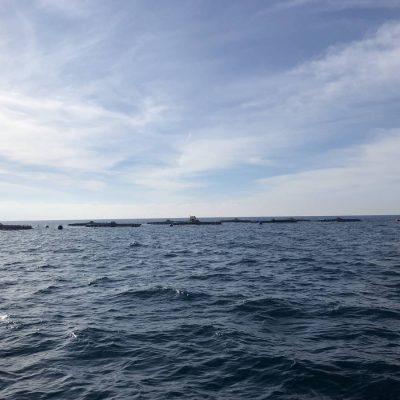 Centro de cultivos marinos Andromeda Group