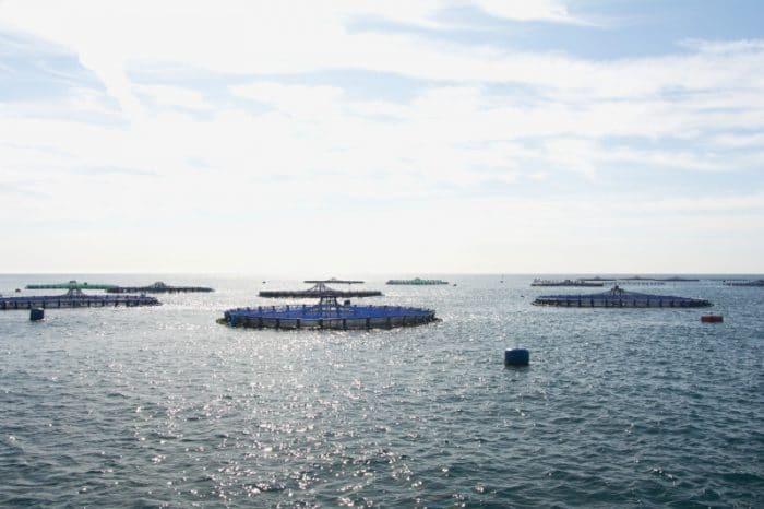 Granjas marinas Frescamar alimentacion Comunidad Valenciana
